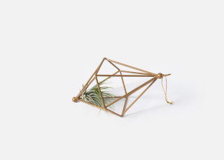 附加项目:Airplant Ornament