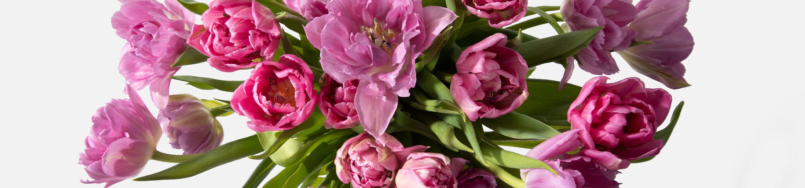 tulips flowers banner