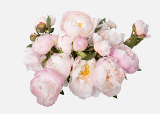 Double The Peony image number 2