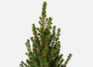 The Spruce image number 1