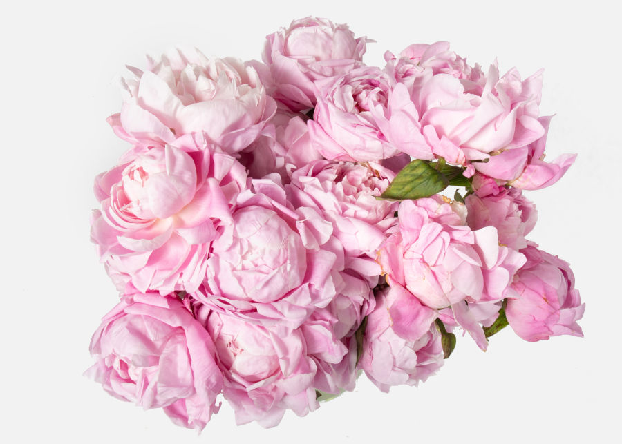 Double The Peony image number 1