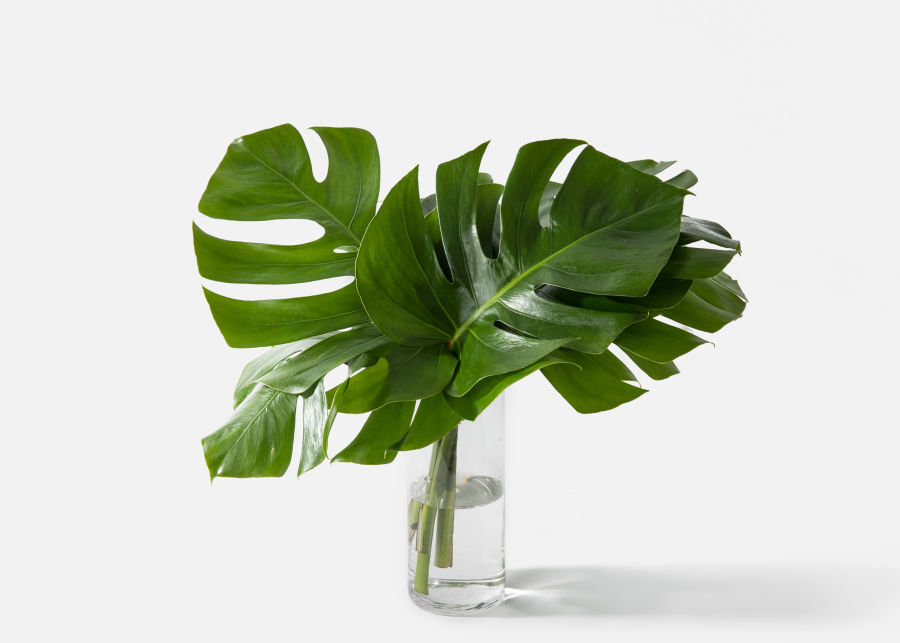 Full View of The Monstera image number 0
