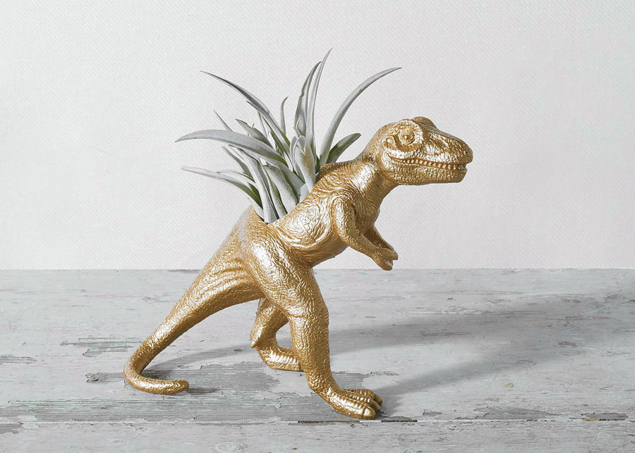 The Rex with Air Plant image number 0