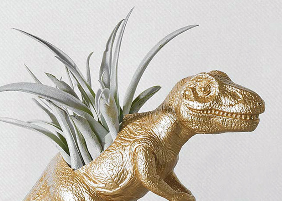 The Rex with Air Plant image number 1